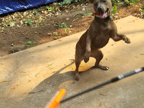 10,000 Uses for Waterblades: Yards and Puppers