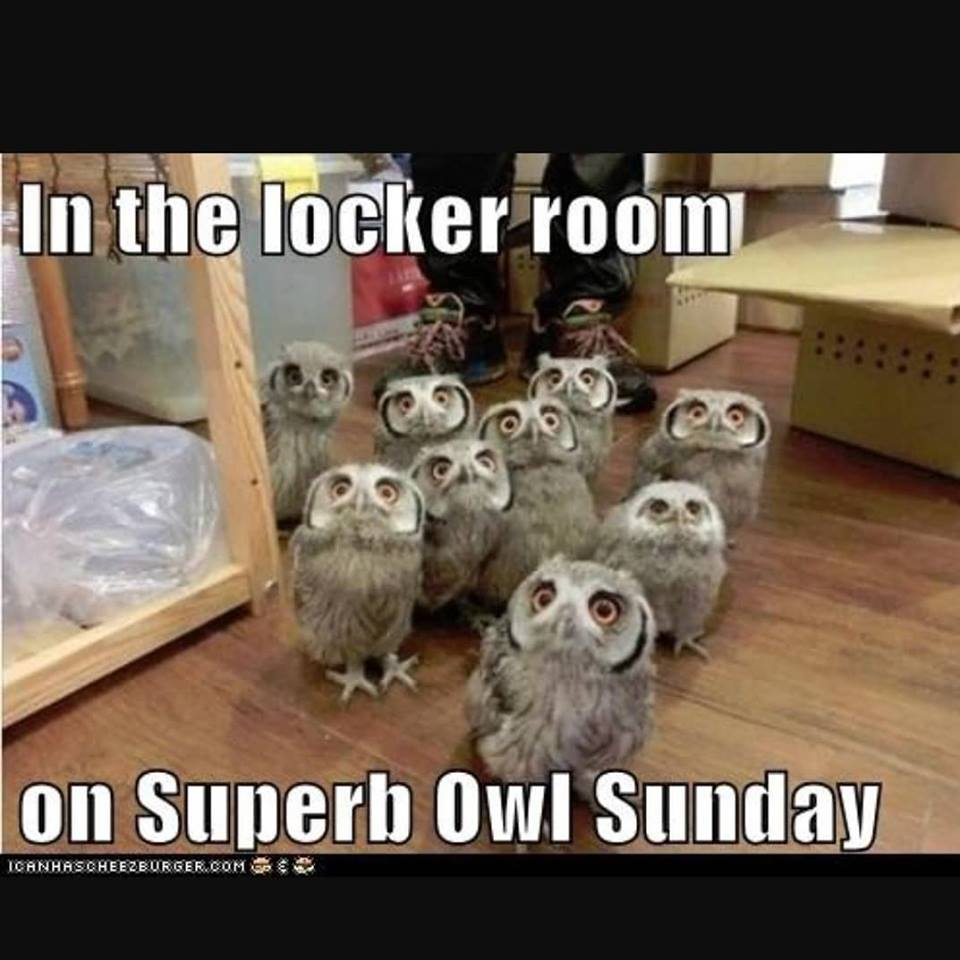 10,000 uses for Water Blades week 69: Superb Owl Sunday